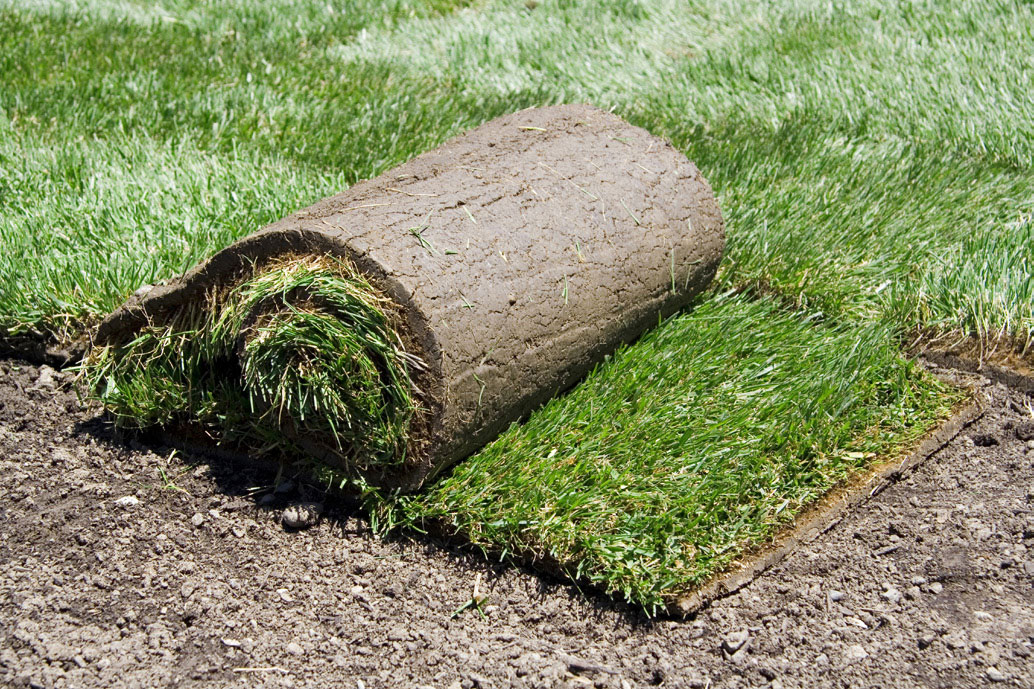 Spring lawn care tips harmony outdoor living for Erba in rotoli