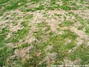 Lawn clippings left in piles