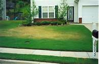 Example of drought stress in a lawn. Notice the yellow discoloration.