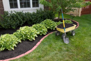 A wheelbarrow is helpful when spreading mulch. Be sure to use a shovel or a strong metal rake.