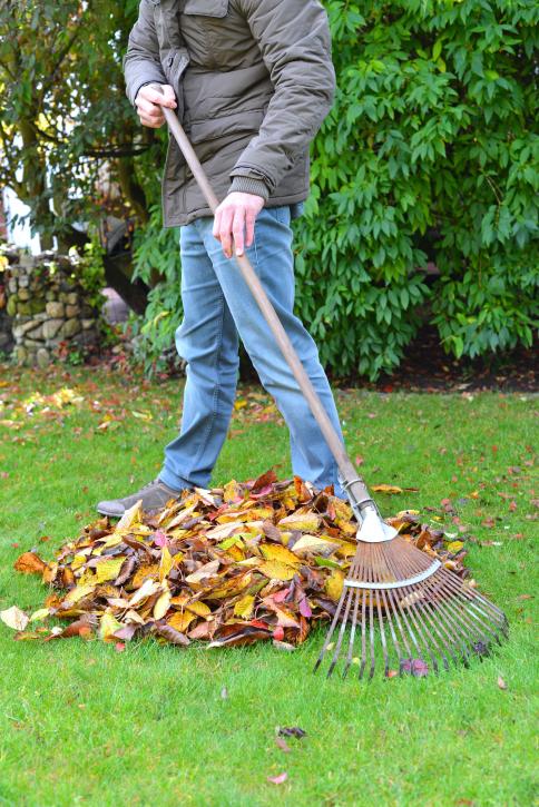 raking the lawn