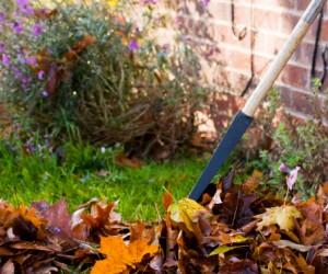 Lawn raking