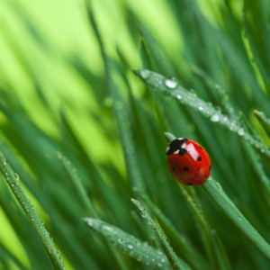 lady bug grass lawn