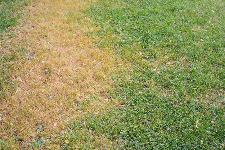 dead grass - Aerate Lawn