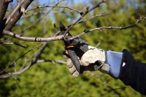 Pruning in the garden