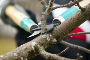 Man with gloves is cutting branches from tree
