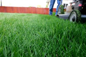 Ground level view of lawn being mowed.