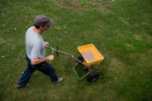 Man spreads fertilzer on a lawn20101002034See more in my Landscapers lightbox: