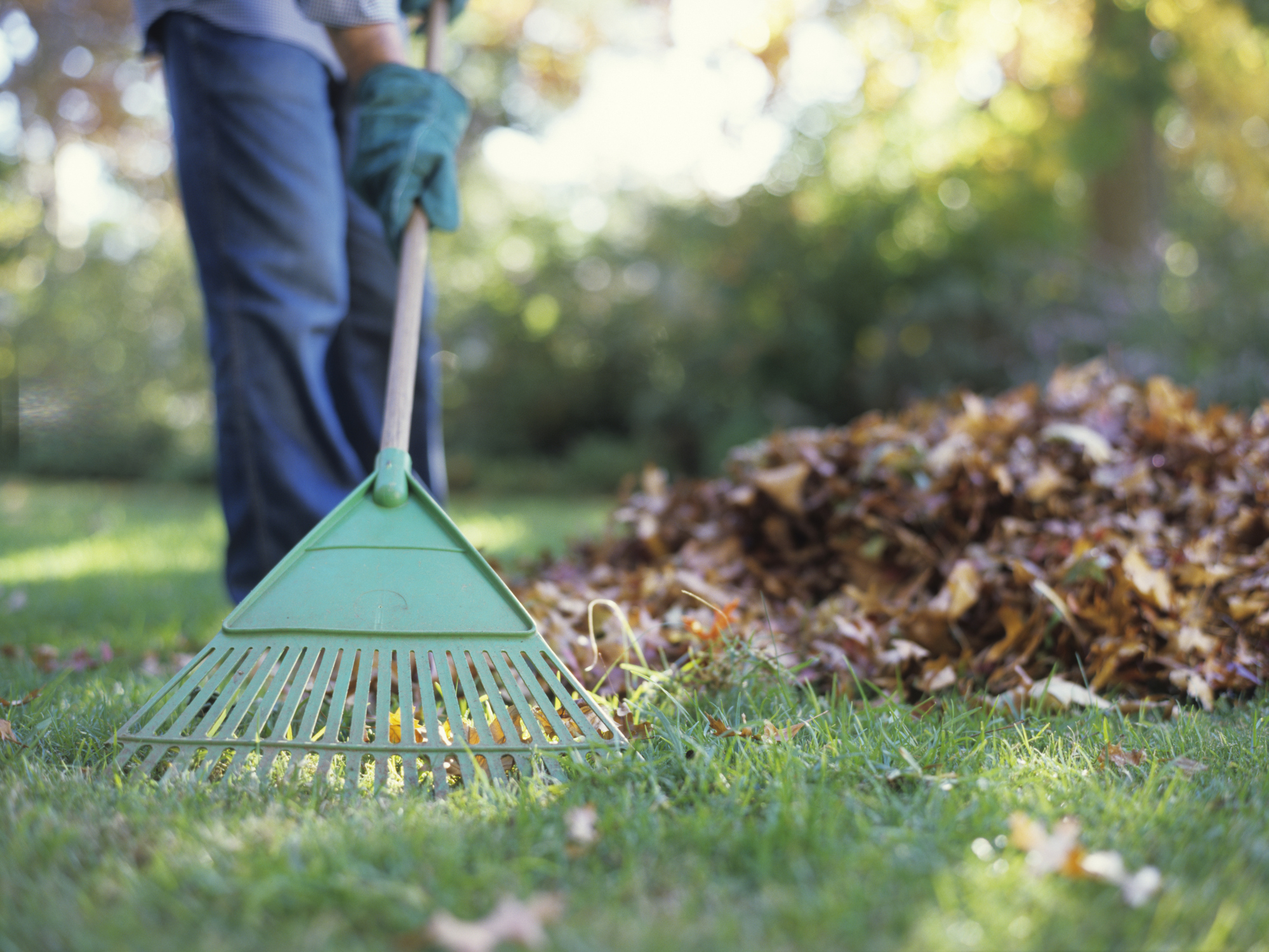 6 fall lawn care tips harmony outdoor living - Autumn lawn care advice ...