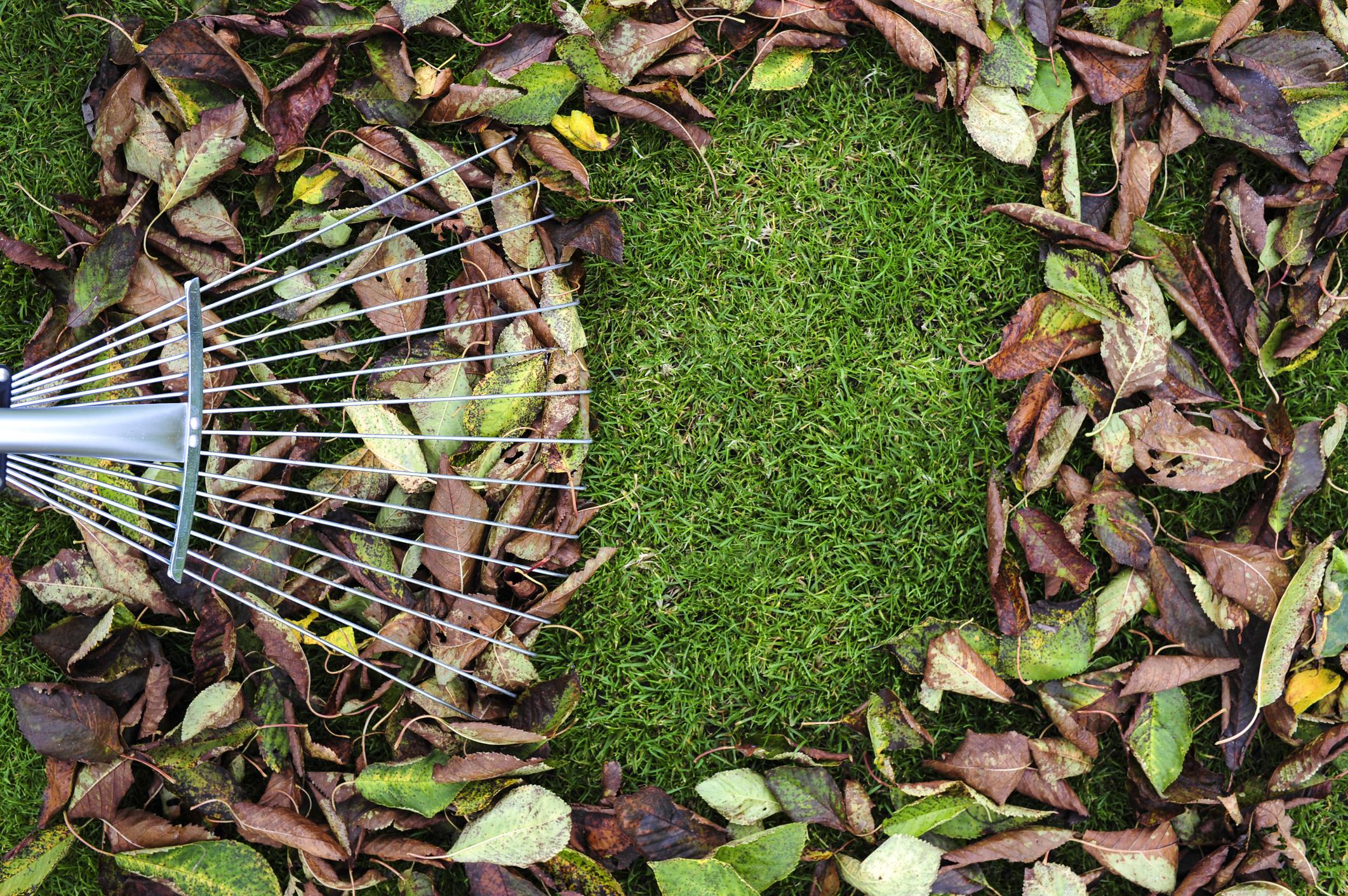 Pile von Herbstlaub mit Lüfter Rake auf Rasen