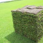 Sod Stack in Field